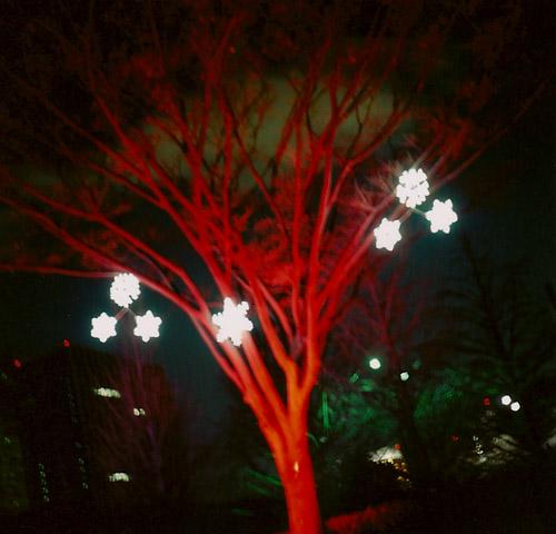 star&tree.jpg